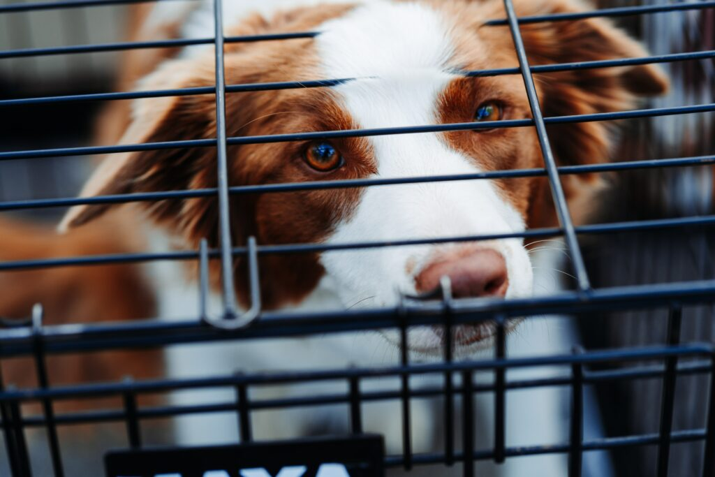 picture of a dog in a crate